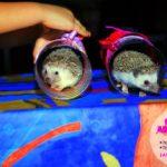 дрессированные животные на праздник