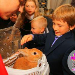 шоу пушистиков на детские праздники область и подмосковье