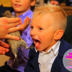 шоу с дрессированными животными на день рождение ребёнка